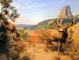 纽约美国自然历史博物馆 - 实景模型