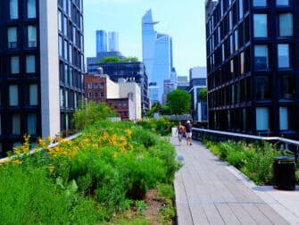 纽约公园精选 - 夏日的高线公园