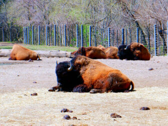 纽约布朗克斯动物园 - 正在休息的动物