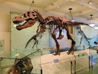 纽约美国自然历史博物馆 - 恐龙