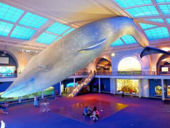 纽约美国自然历史博物馆 - 海洋世界