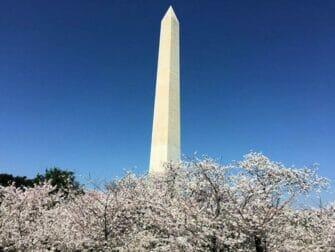 纽约至华盛顿巴士之旅 - 纪念碑