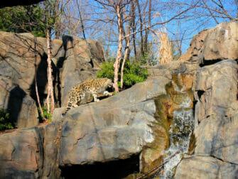 中央公园动物园门票 - 雪豹