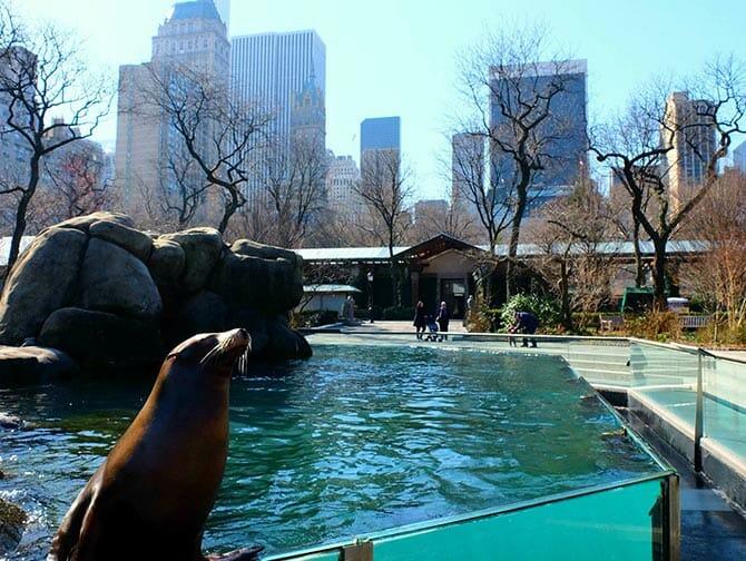 中央公园动物园门票