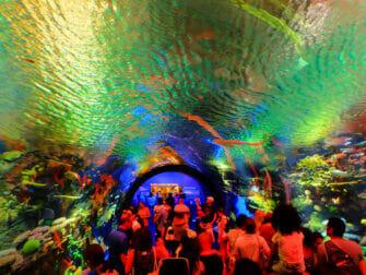 纽约水族馆 - 鱼类