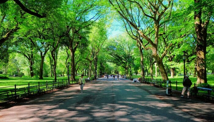 纽约母亲节 - 中央公园the Mall