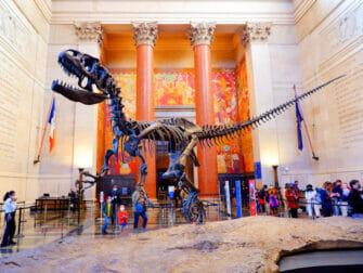 纽约美国自然历史博物馆 - 霸王龙