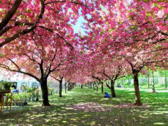 纽约布鲁克林 - 布鲁克林植物园